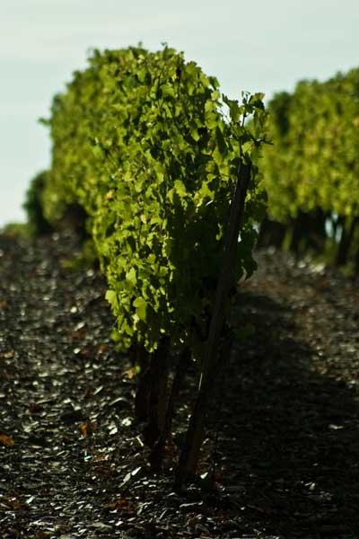 Tecnovino Programa de apoyo al sector vitivinicola DO Conca del Barbera