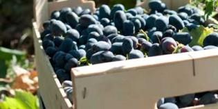 El futuro que viene en 2030 para el vino europeo: consumo estable y mayores exportaciones