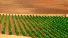 La Ruta del Vino de Rueda, una marca integradora y de atractivo turístico