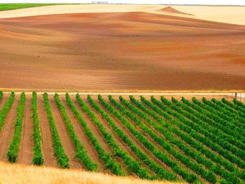 Tecnovino Ruta del Vino de Rueda Perez Andres