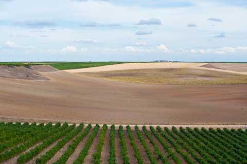 Tecnovino Ruta del Vino de Rueda vinedo Munoz Romero