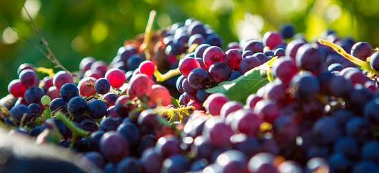 Tecnovino Rutas del Vino de Madrid 3