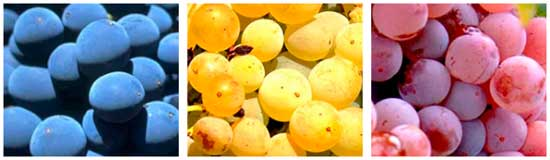 Tecnovino concurso internacional Garnachas del Mundo vinos