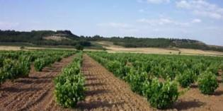 España mantiene su liderazgo como primer viñedo mundial y principal exportador de vino en volumen