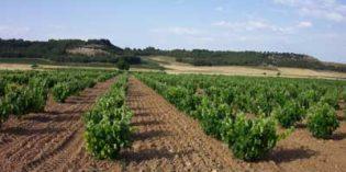 Unión de Uniones disconforme con la regulación del aprovechamiento del potencial productivo vitivinícola