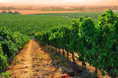 Tecnovino vinos emergentes Turquia Prowein vinedo