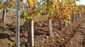 Protectores cuadrados de viñedos para ahorrar en logística y transporte