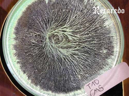 Tecnovino cristalizaciones sensibles vino Recaredo 1