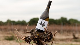 VMalcorta: un vino que recupera la variedad Verdejo Malcorta