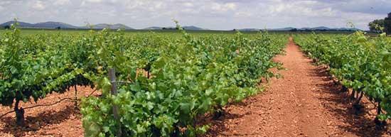 Tecnovino comercializacion del vino Dcoop Vinos Baco