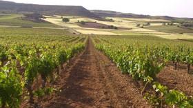 Un vino exclusivo se esconde tras la compra de viñas en Ribera de Duero por parte de Torres