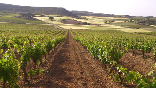 Tecnovino compra de vinas Bodegas Torres
