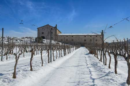 Tecnovino vino Purgatori Bodegas Torres finca 2