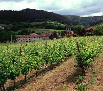 Tecnovino derechos de plantacion de vinedos
