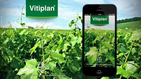 Tecnovino maduracion de la uva Bayer CropScience Vitiplan