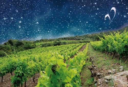 Tecnovino muestra de vinos biodinamicos