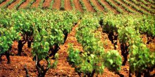 Ferias vitivinícolas y eventos en noviembre y diciembre de 2018