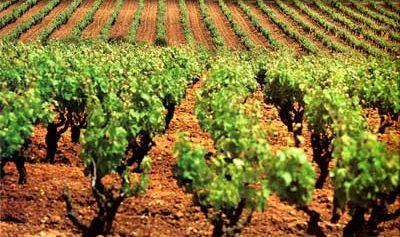 Tecnovino plantaciones de vinedo UE sistema de autorizaciones