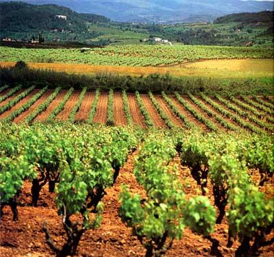 Tecnovino plantaciones de vinedo UE