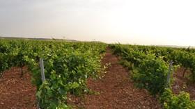 Los sensores inalámbricos para mejorar la producción del viñedo llegan a Matarromera