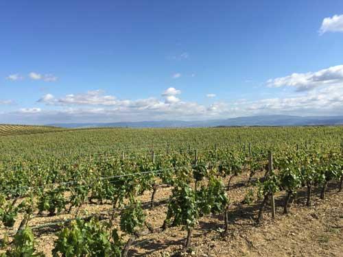 Tecnovino Ardo Koloreak Rioja Alavesa Abra 0