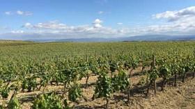 Pinceladas de un viaje por Rioja Alavesa con Ardo Koloreak