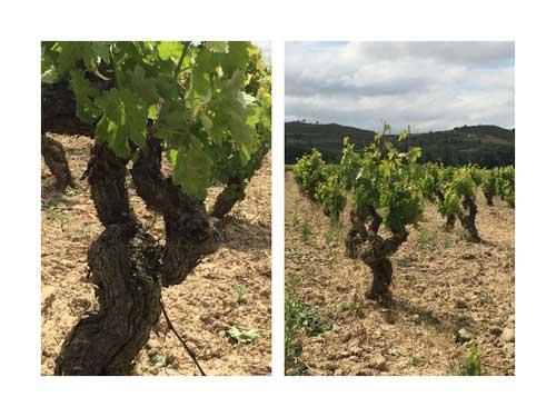 Tecnovino Ardo Koloreak Rioja Alavesa Abra 3
