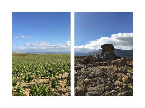 Tecnovino Ardo Koloreak Rioja Alavesa Abra 8