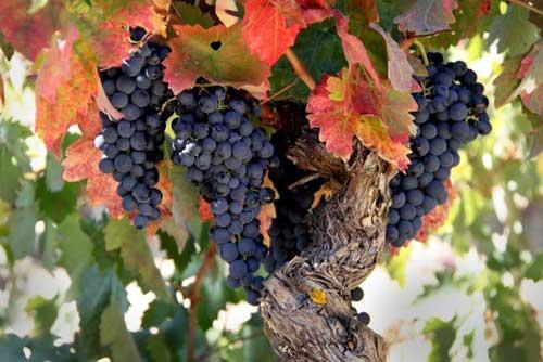 Tecnovino Rioja Alavesa Ardo Koloreak Basque Wine 3