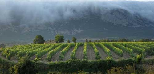 Tecnovino Rioja Alavesa Ardo Koloreak Basque Wine