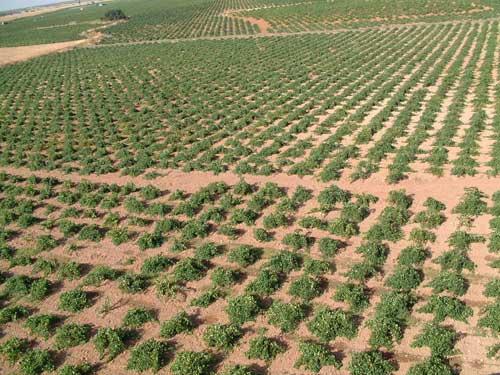 Tecnovino exportaciones de vino espanol Mancha
