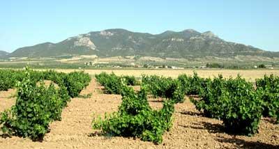 Tecnovino Feaga sector vitivinicola