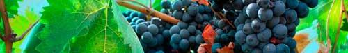 Tecnovino Rioja Alavesa Ardo Koloreak 1