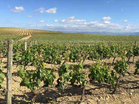Tecnovino Rioja Alavesa vinos 2