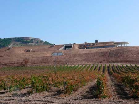 Tecnovino Yllera bodega Ribera del Duero 5