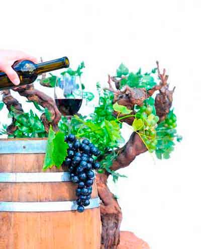 Tecnovino desechos de la uva nuevos productos Ainia 1
