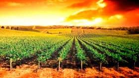 La Rioja y Valencia, las comunidades que más crecen en valor en exportación de vino
