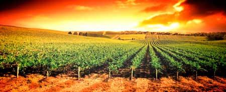 Tecnovino exportacion de vino comunidades