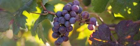 Tecnovino vinos con DOP 2