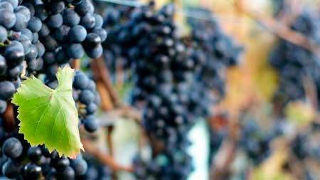 Tecnovino Monastrell congreso Vinos Alicante 1