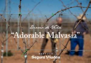 Tecnovino Segura Viudas Diario de Vina malvasia