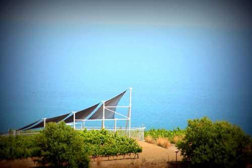Tecnovino bodega de vinos naturales de Alta Alella 4