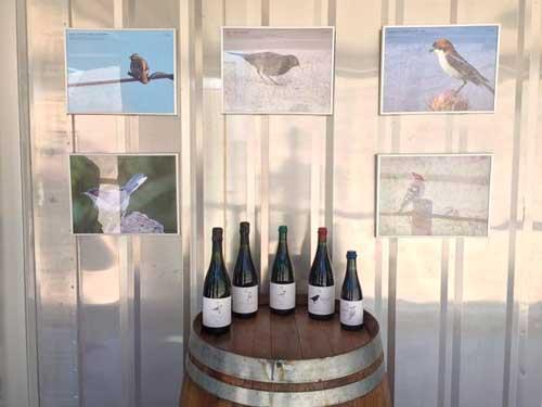 Tecnovino bodega de vinos naturales de Alta Alella 5