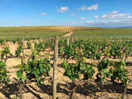 Tecnovino enoturismo Rioja Alavesa Ardo Koloreak 4