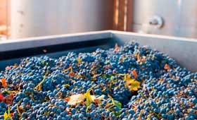 Tecnovino plazos de pago de la uva Aica