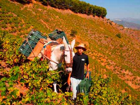 Tecnovino vinas mas viejas Bodegas Jorge Ordonez 1