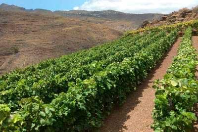 Tecnovino Concurso Internacional de los Vinos de Montana 2