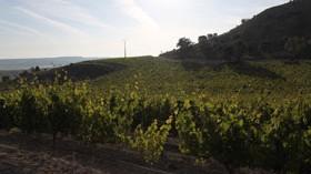 La importancia de invertir en el viñedo