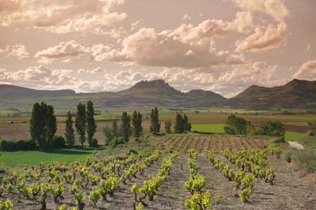 Tecnovino estado del vinedo Universidad de La Rioja