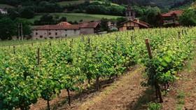 El Magrama informa sobre las autorizaciones de las nuevas plantaciones de viñedo